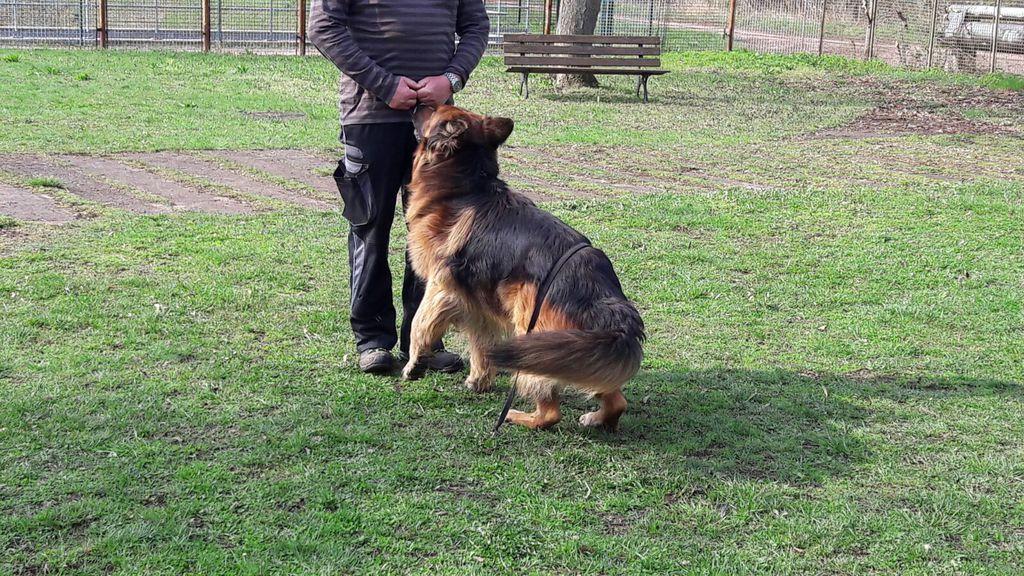 zwei hunde aneinander gewöhnen